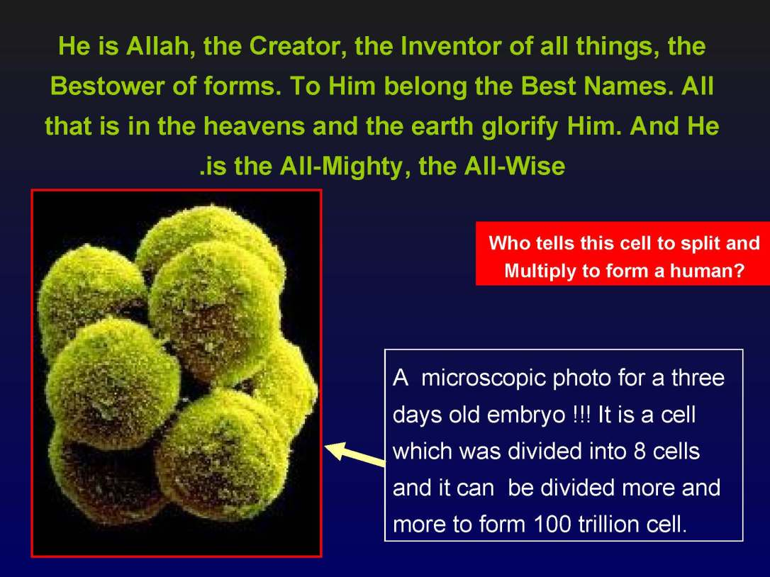 creationofhumananebmofwhatwritten1431yearagoinquran-100827064353-phpapp01_Page_21