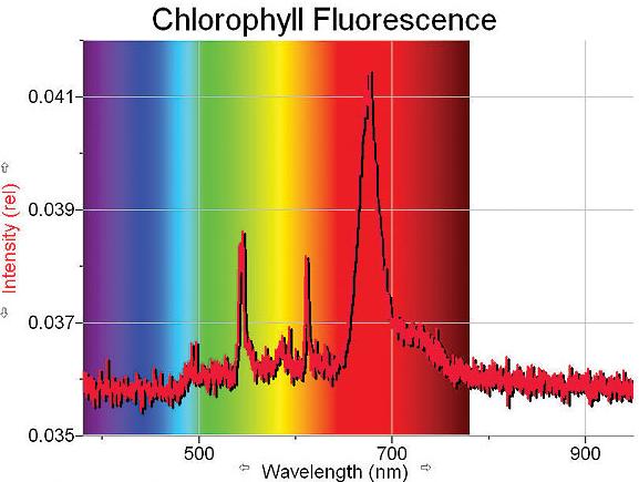 fluorescence_2