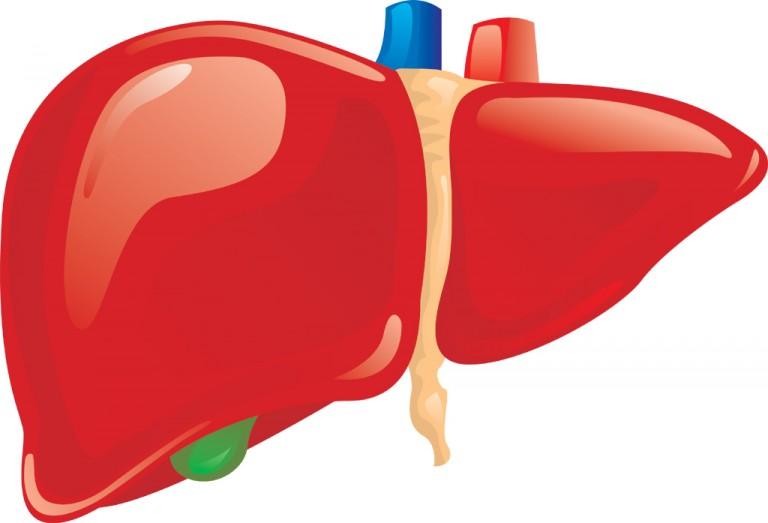 liver-768x523