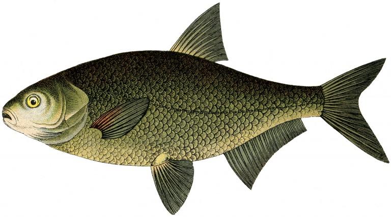 fish-768x427