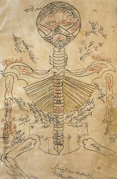 anatomy-1