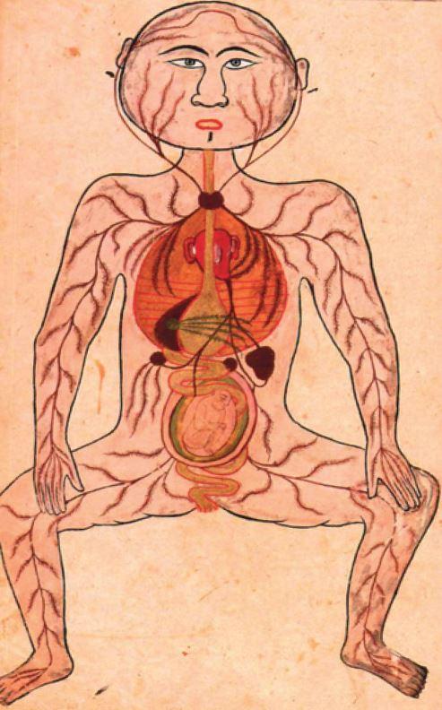 anatomy-2