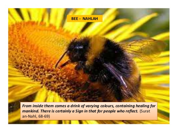 animals-mentioned-in-quran-2-638