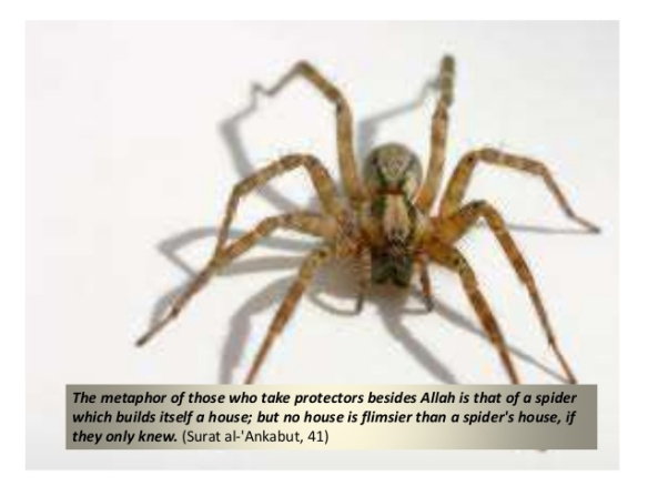animals-mentioned-in-quran-20-638