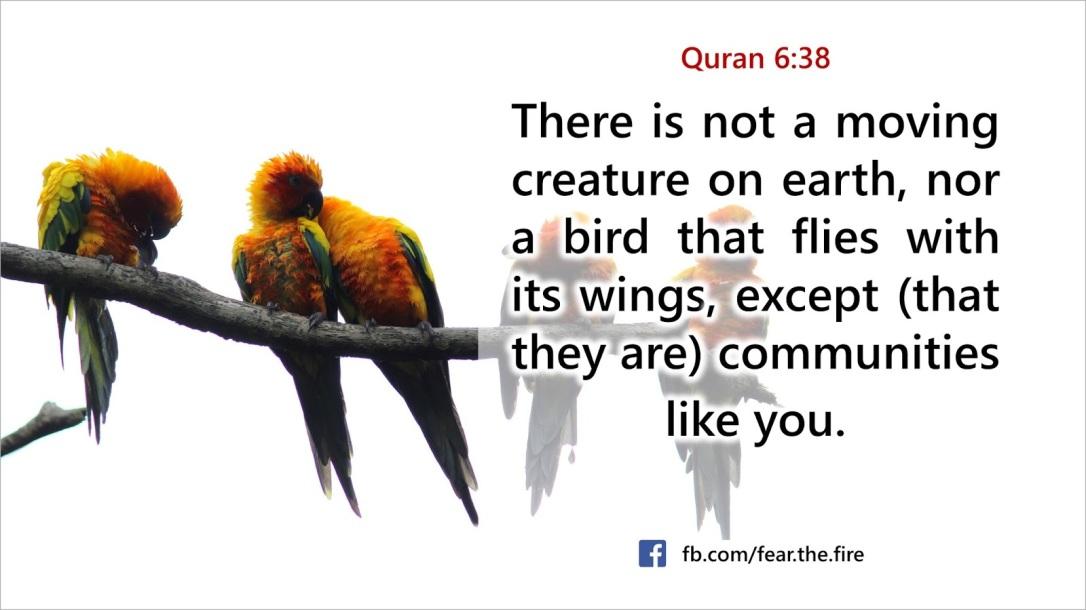 birds-form-communities-like-us