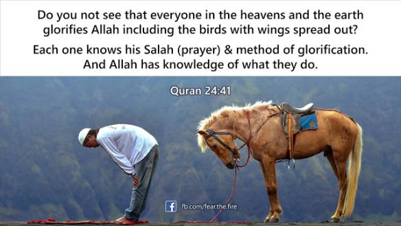 every-animal-prays-to-allah