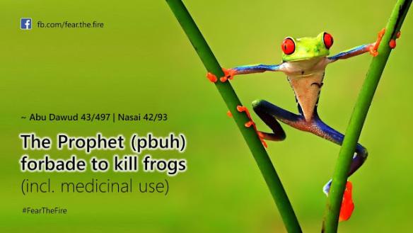 killing-frog-forbidden