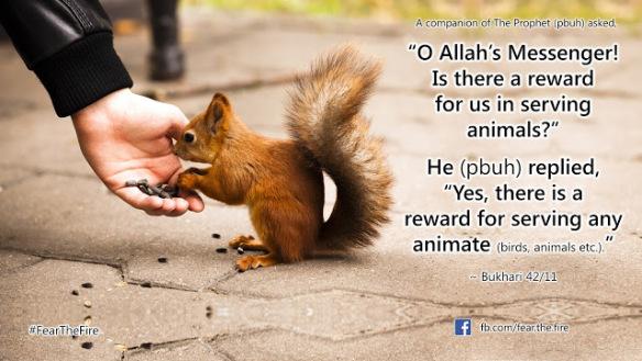 reward-in-serving-animals