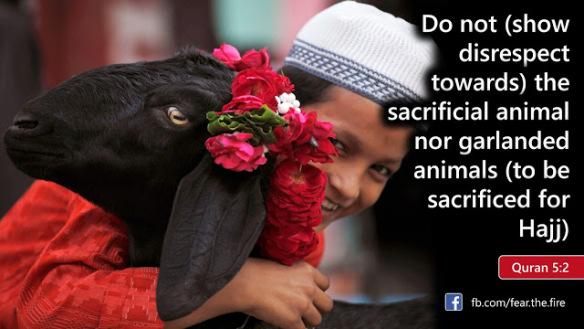 sacrificial-animal
